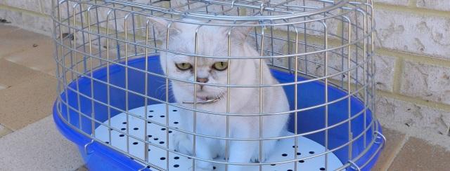 prisoner-tail-coverage